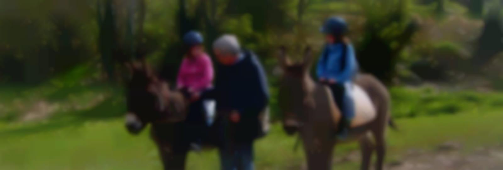 Les ânes de Malengen