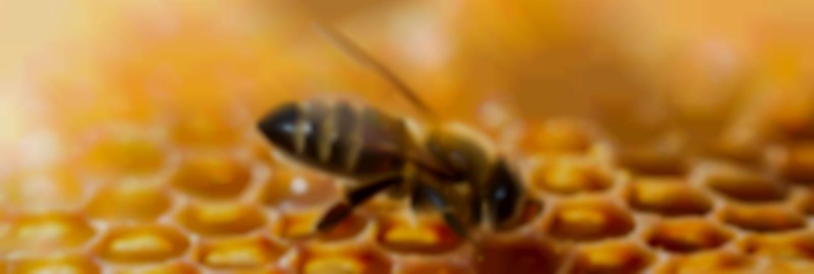 Les ruches de Beauce