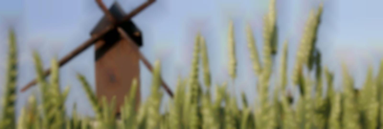 Moulin à vent du Paradis - Sancheville